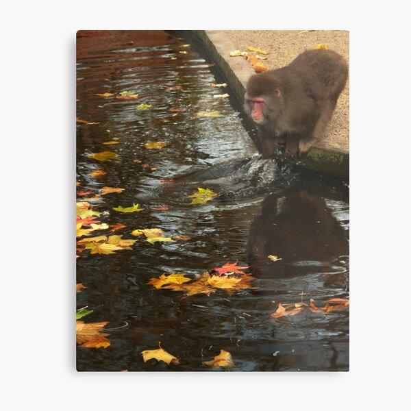 Playing with autumn leaves or...? - Spelen met herfst bladeren of... ?  Metal Print