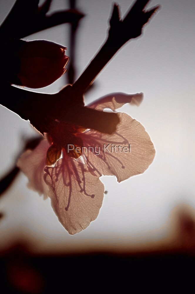 Blossoming light by Penny Kittel