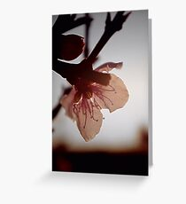Blossoming light Greeting Card