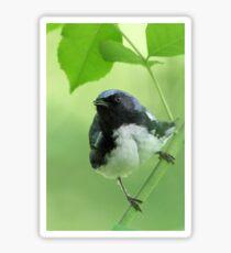 Black-throated Blue Warbler Sticker
