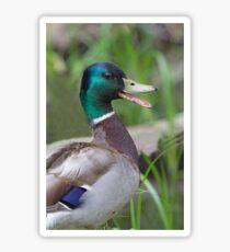 Mallard Duck Talking Sticker