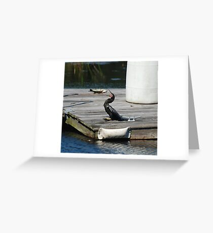 Catching a fish in mid air  Greeting Card