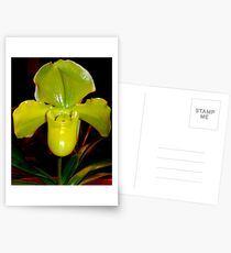 Lady slipper orchid Postcards