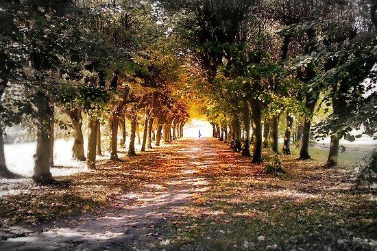 The Path by DAntas