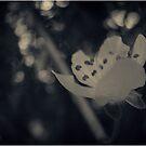 °magical garden° by MelAncholyPhoto