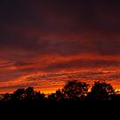 My tonight's sunset... panorama by steppeland