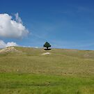 Alone in the Valles Caldera by JBoyer