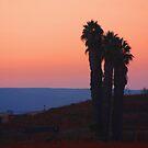 San Diego Sunset by Heather Friedman