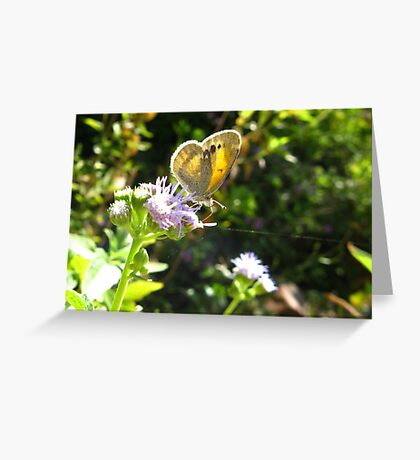 Butterfly ~ Dainty Sulfer Greeting Card