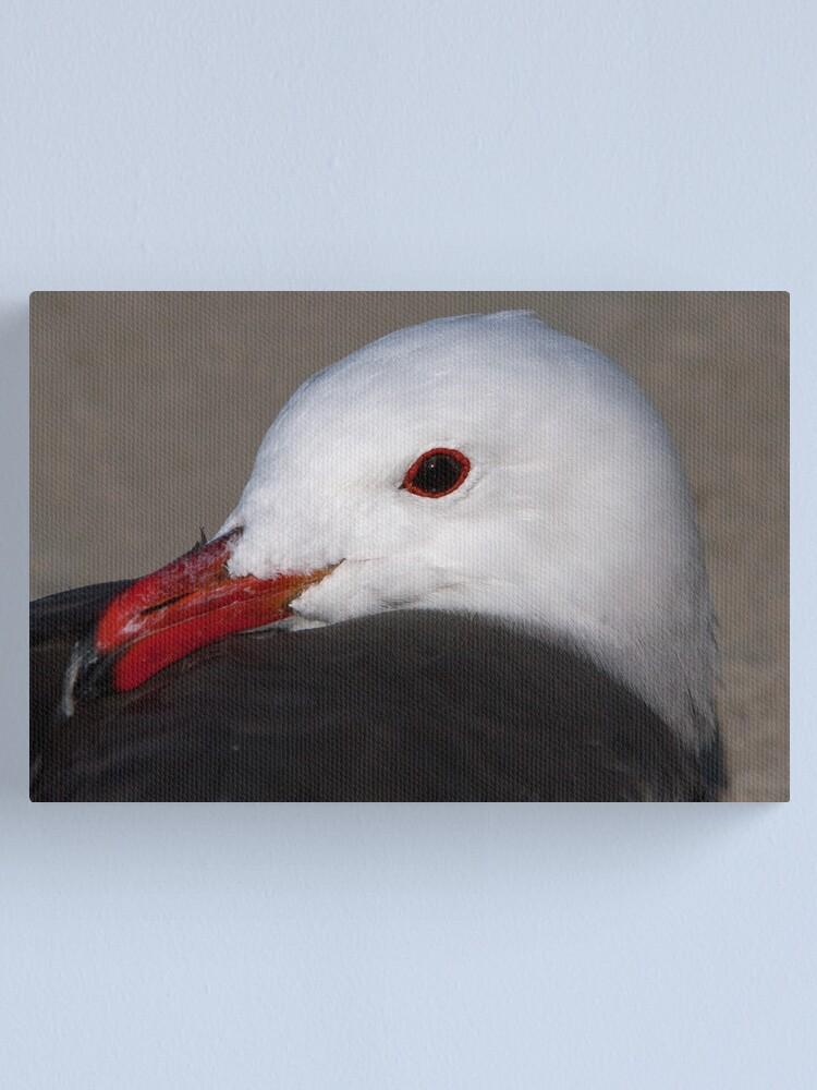 Alternate view of Portrait of a Heermann's Gull Canvas Print
