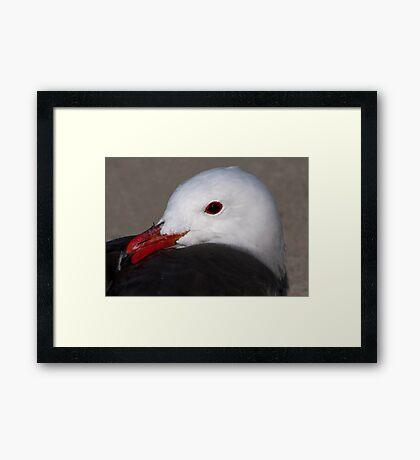 Portrait of a Heermann's Gull Framed Print