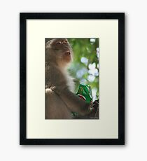 Cheeky theif Framed Print