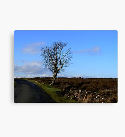 The Lonesome Tree Canvas Print