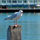 seagull on a post by SUBI