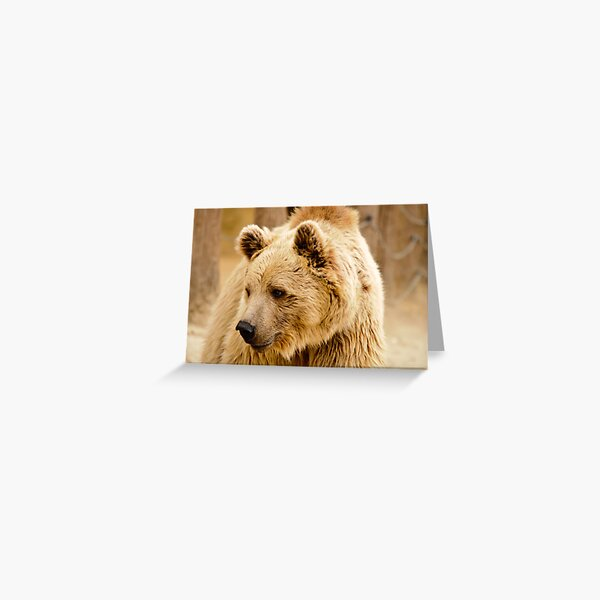 oso Greeting Card