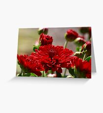 Crimson Petals Greeting Card