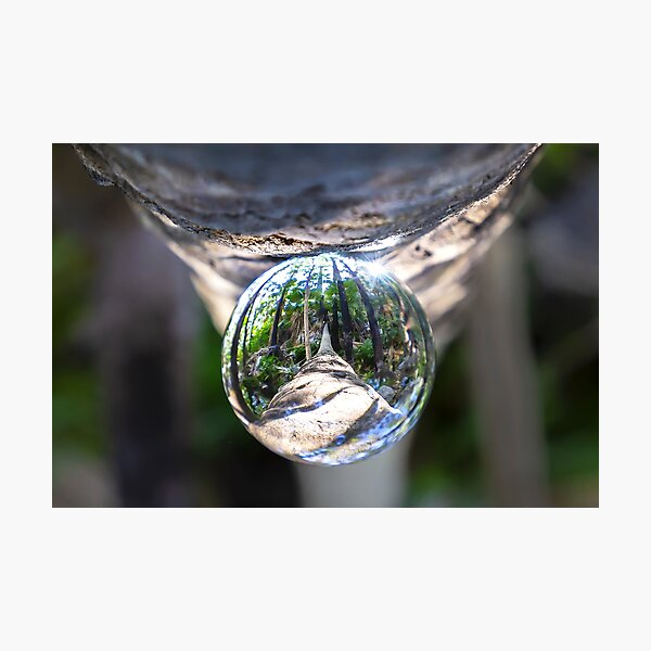 Creative Collection - Tree Drop Zebadee Falls Photographic Print