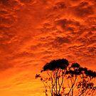 Fiery sunset on Tasmanian gum trees by Michelle Mc Goff