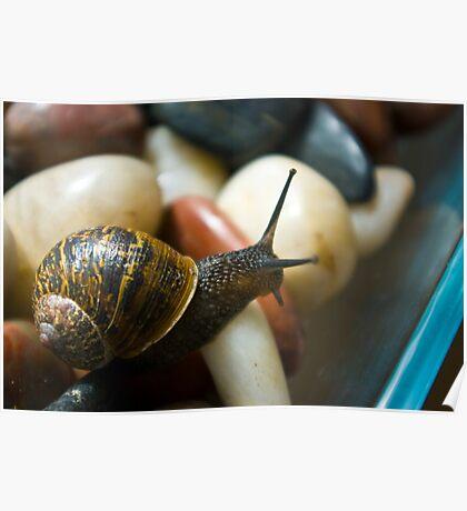 Macro Garden Snail Poster