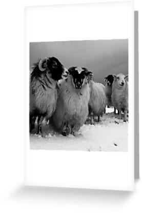the gathering by Helen Suzanne Sharratt