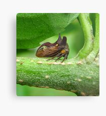 Three-Horned Treehopper Metal Print