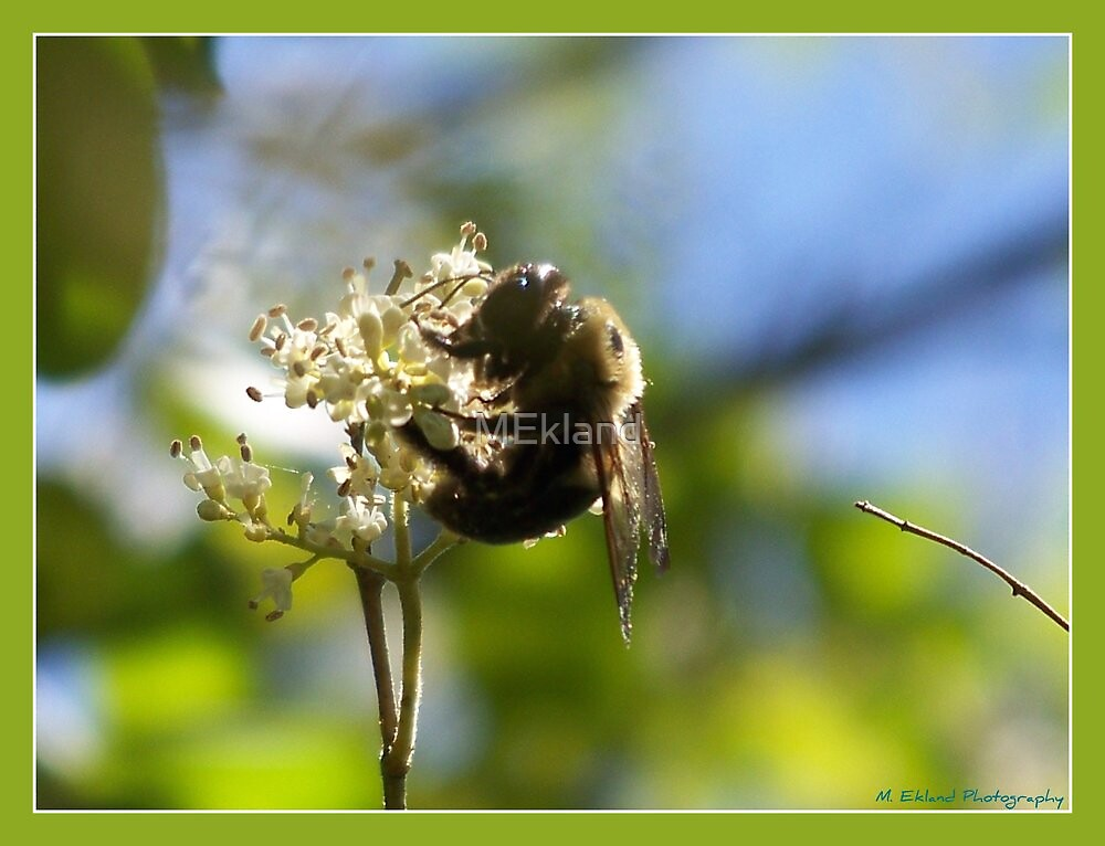 """""""Sammy's Bumble Bee"""" by MEkland"""
