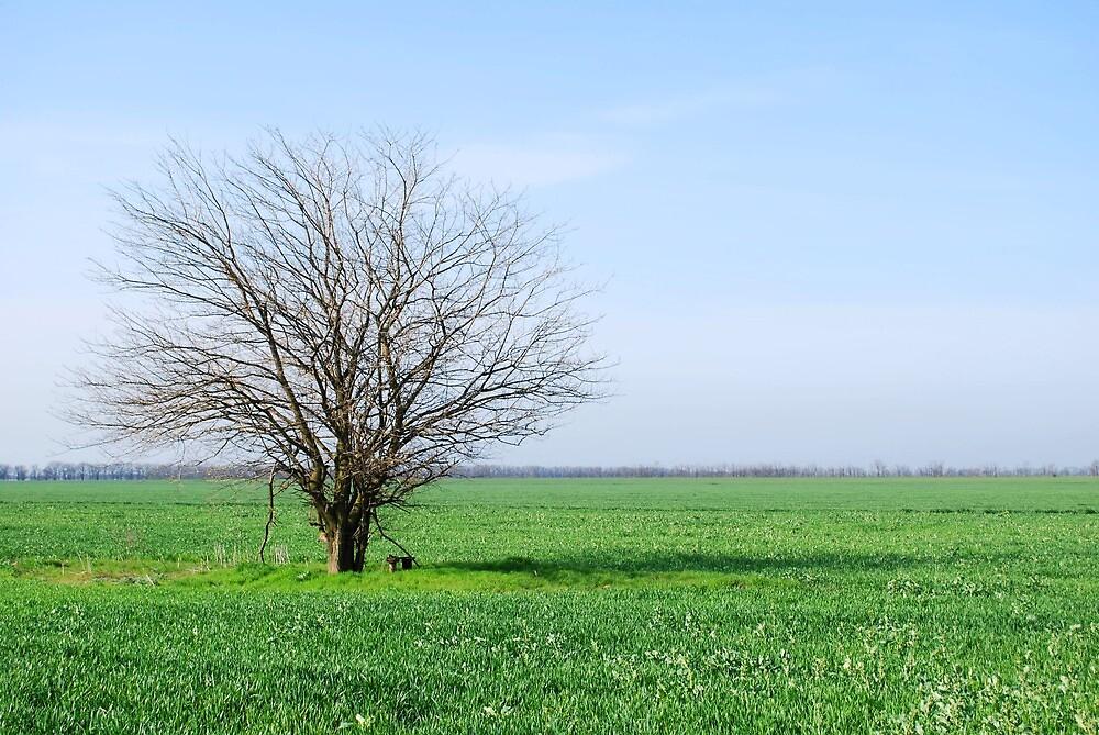Tree in the field by Dfilyagin