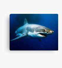 Great White Shark Canvas Print