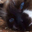 My blue-eyed boy by TheMobFanClub