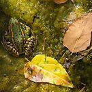 Autumn frog by ser-y-star