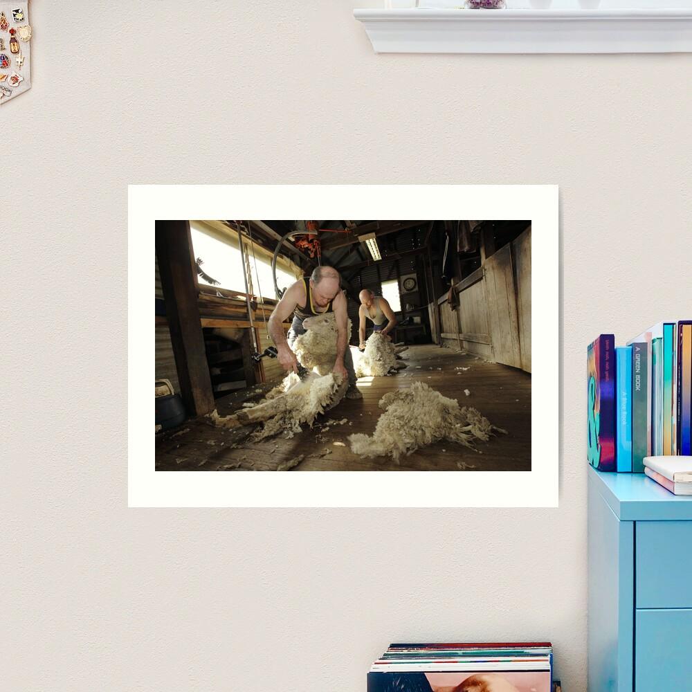 Shearing, Tooborac, Victoria, Australia Art Print