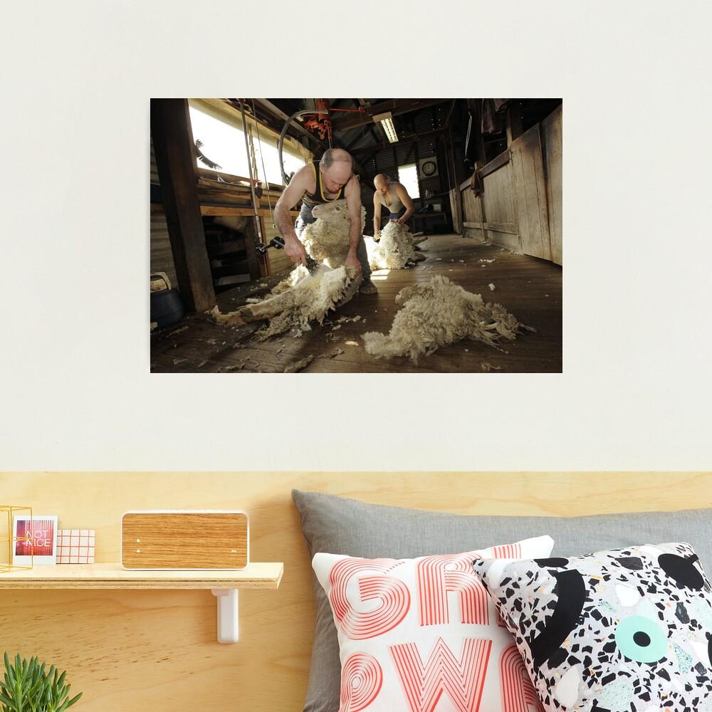 Shearing, Tooborac, Victoria, Australia Photographic Print
