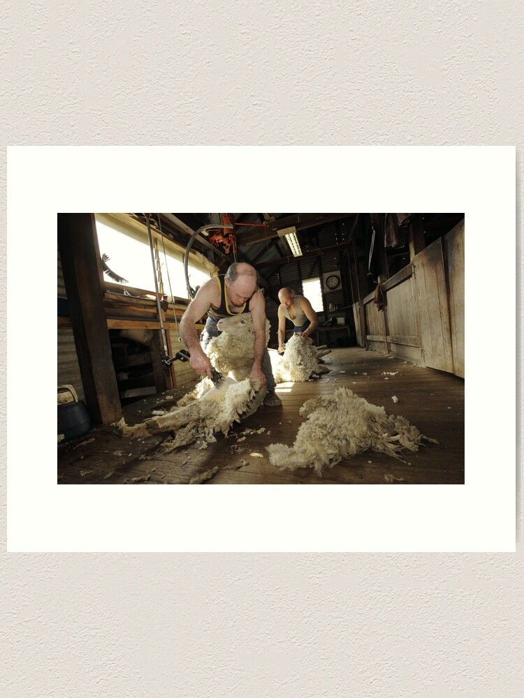 Alternate view of Shearing, Tooborac, Victoria, Australia Art Print