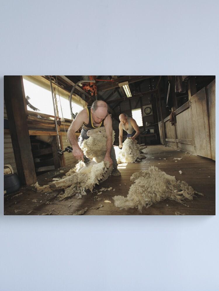 Alternate view of Shearing, Tooborac, Victoria, Australia Canvas Print