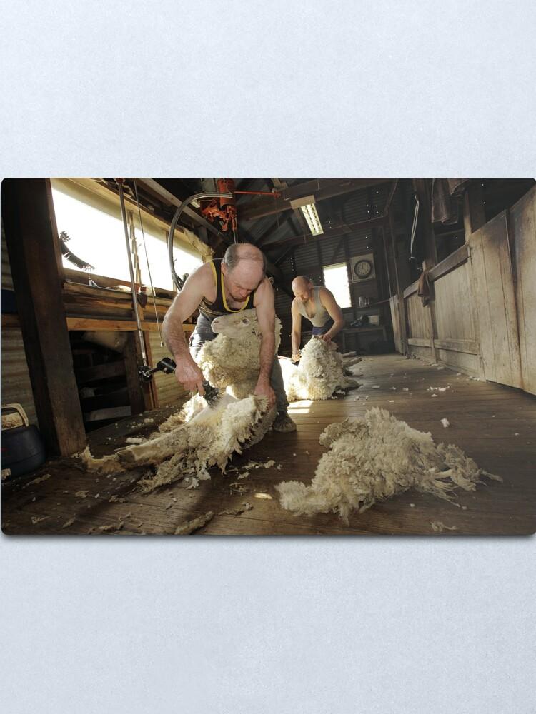 Alternate view of Shearing, Tooborac, Victoria, Australia Metal Print