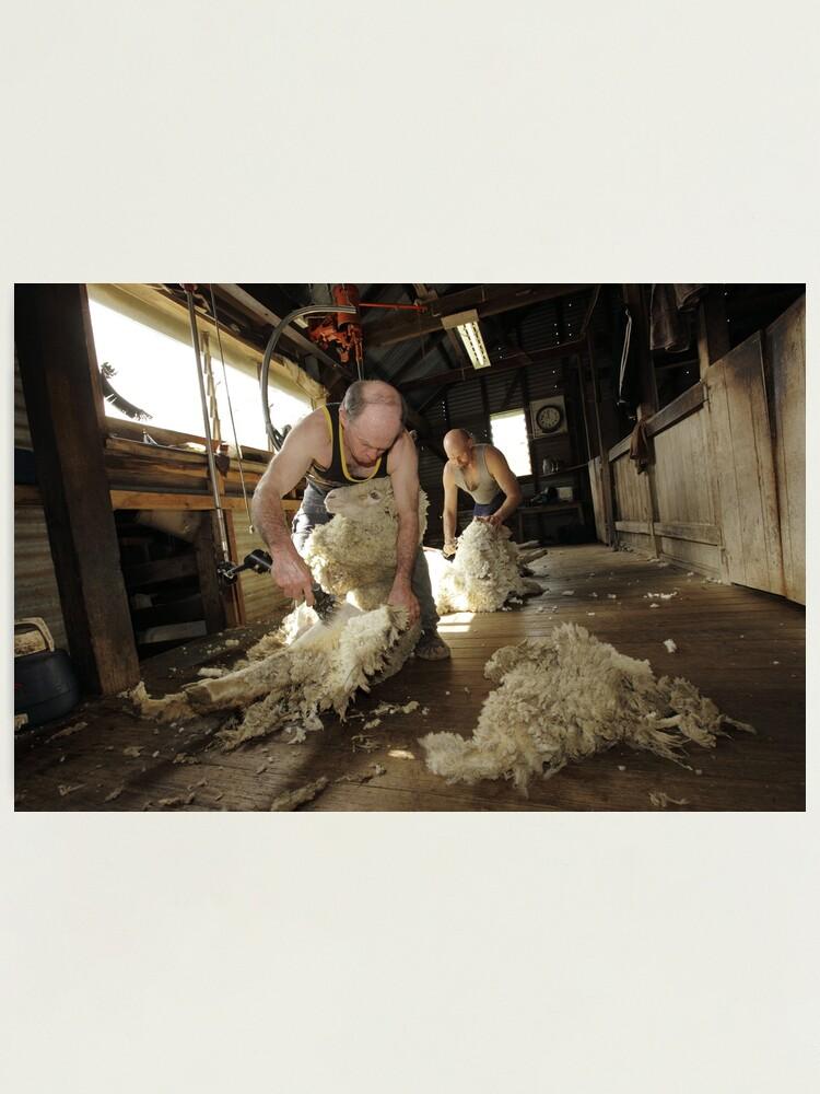 Alternate view of Shearing, Tooborac, Victoria, Australia Photographic Print