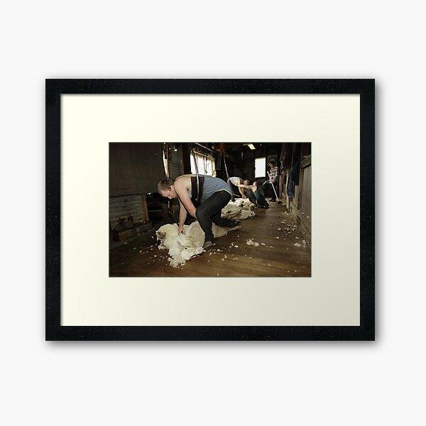 Shearing, Tooborac, Victoria, Australia Framed Art Print
