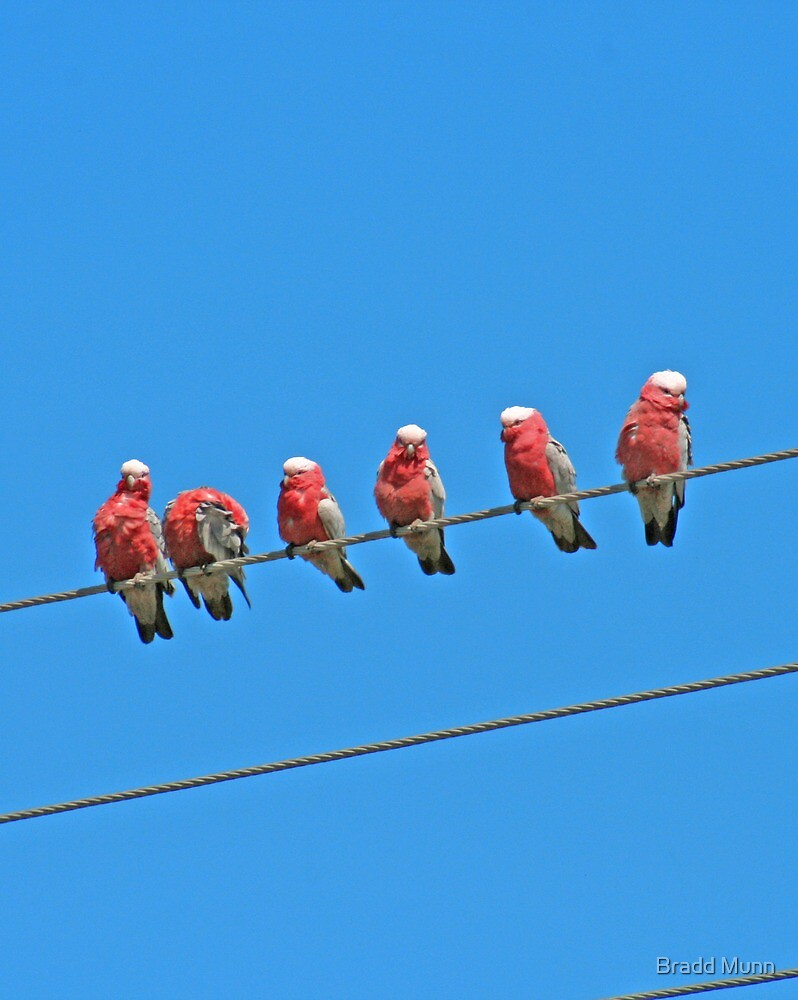 Birds on a Wire by Bradd Munn