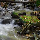 Babbling Brook by RandiScott