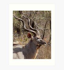 Impressive Kudu Male Art Print