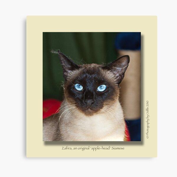 cat calendar image #5 Zafira Canvas Print