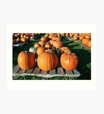 Pick a Pumpkin any Pumpkin! Art Print