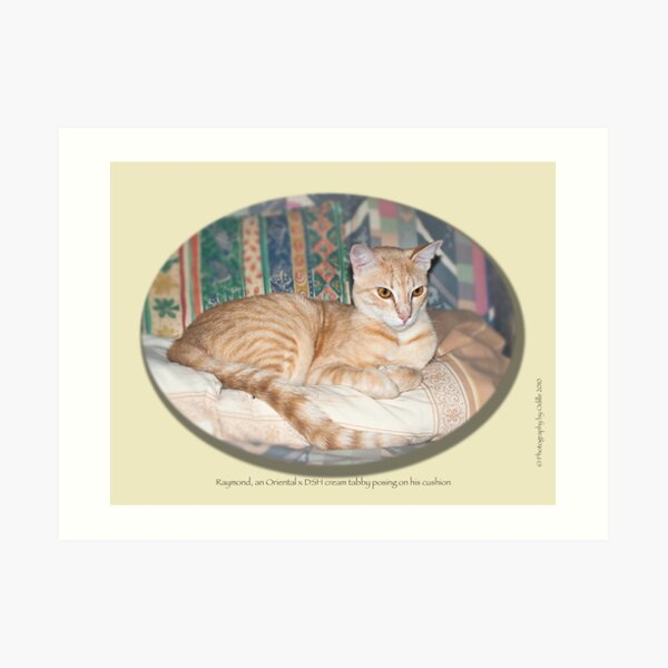 Cat calendar image #8 Raymond in repose  Art Print