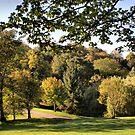 Autumn Glory ~ A Walk In The Park ~ by Sandra Cockayne