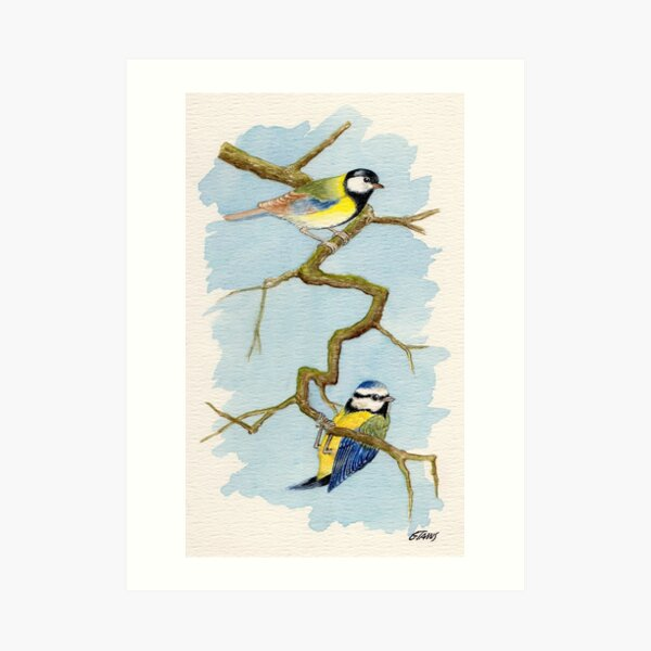 The Blue Tit - Cyanistes Caeruleus - Aquarel Art Print