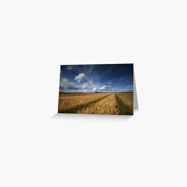 Barley field, Caithness, Scotland Greeting Card