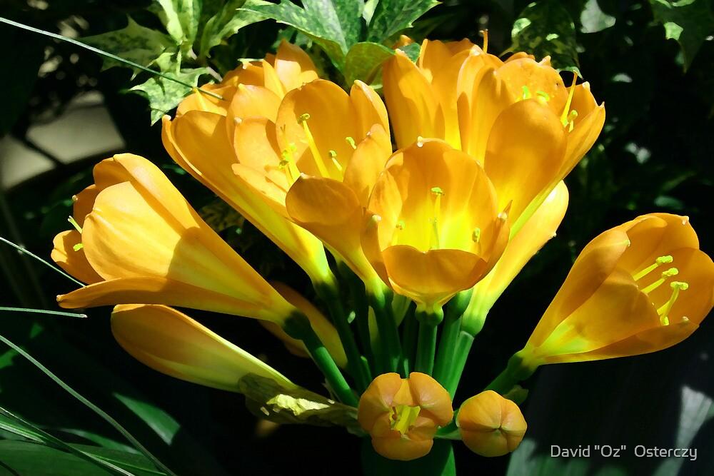 """Yellow now? by David """"Oz""""  Osterczy"""