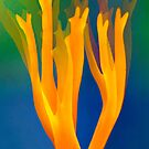Flaming coral fungus by natans