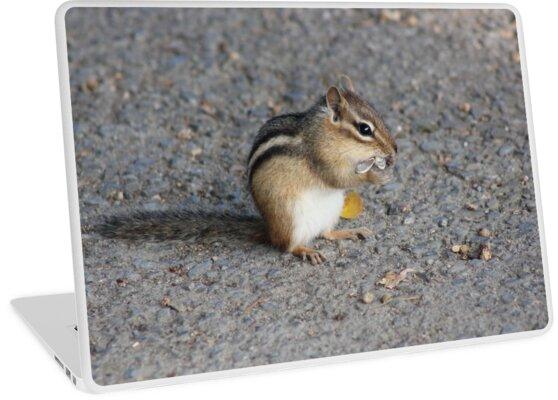 Chipmunk by Vicki Spindler (VHS Photography)