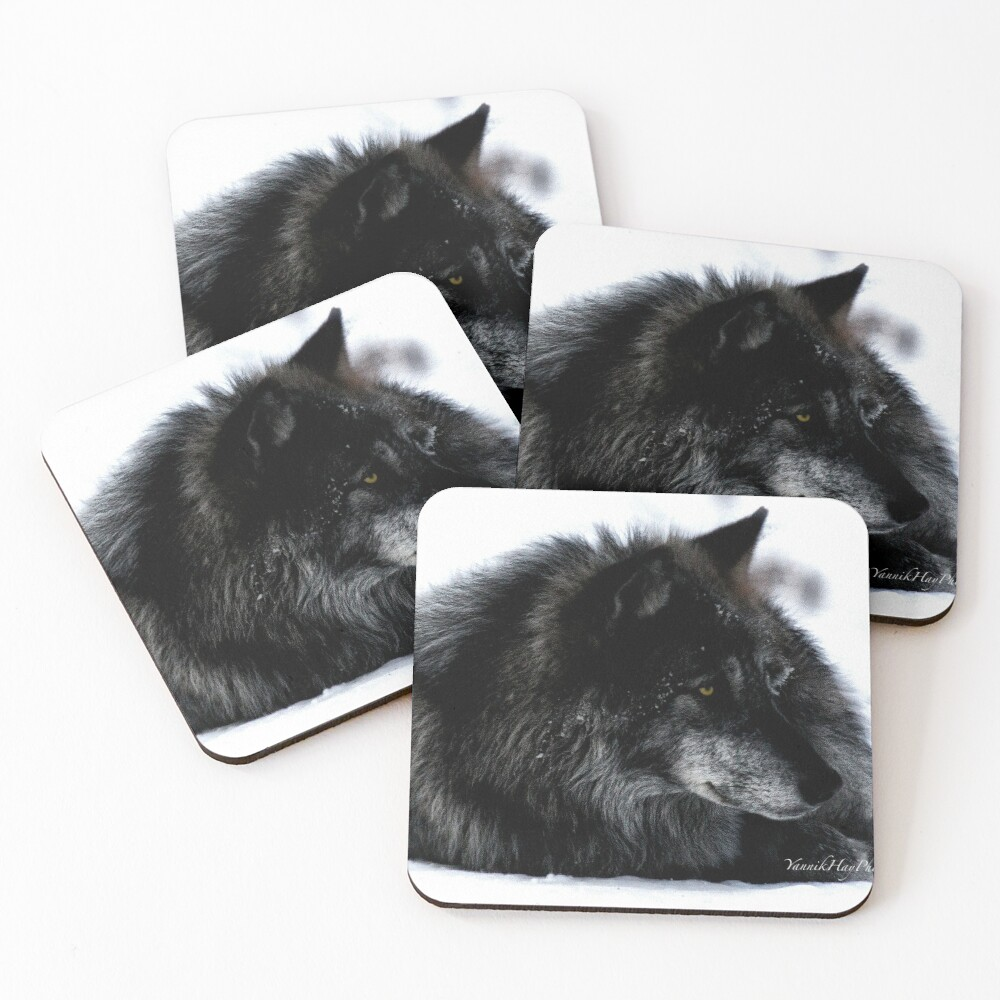 Don't Wake Resting Wolves Coasters (Set of 4)